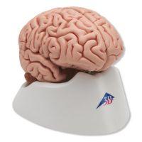 Classic Brain, 5 part